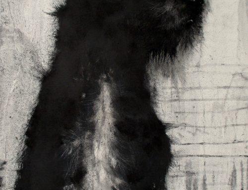 Black Dog 2017