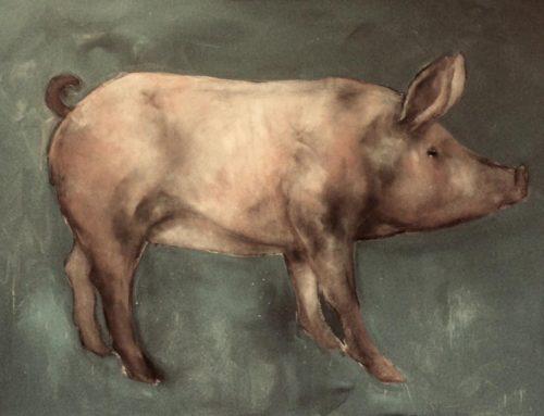 Pig 2019
