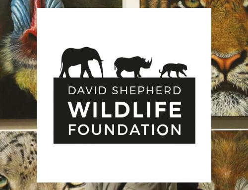 Exhibition: David Shepherd Wildlife Artist of the Year (29 May – 2 June 2019)