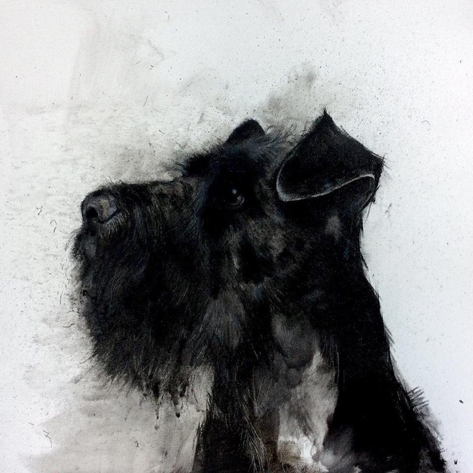 Black Schnauzer 2017